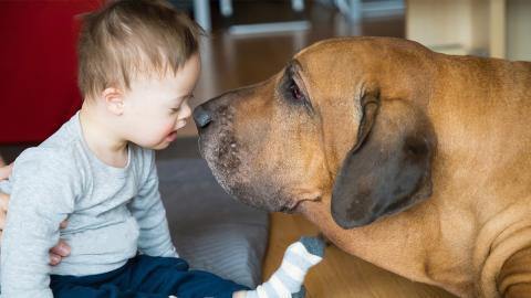 Trisomie 21 beim Tier: Deshalb erkranken nur bestimmte Tierarten am Down-Syndrom