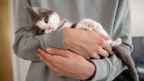 Katzenallergie: Forscher finden vermutlich bald Lösung für Betroffene