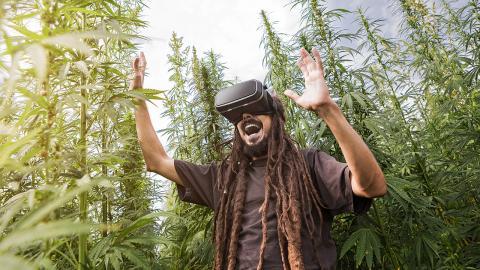 Virtuelles Cannabis statt Rauchen: Eine legale Alternative?