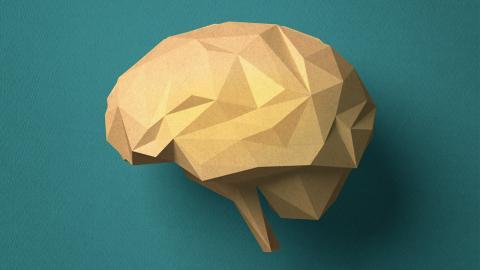 Bahnbrechende Erkenntnis: Labor-Gehirne überraschen mit elektrischer Aktivität