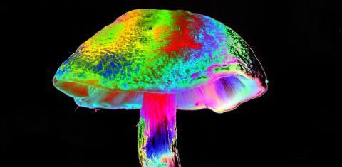 Mann spritzt sich Magic Mushrooms: Kurz darauf wachsen sie in seinem Blut