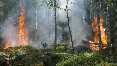 Long Covid: Corona wirkt wie ein Waldbrand im Körper