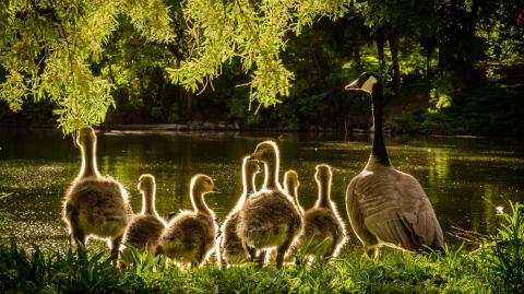 Vogelgrippe erstmals auf Menschen übergesprungen: So groß ist die Pandemie-Gefahr