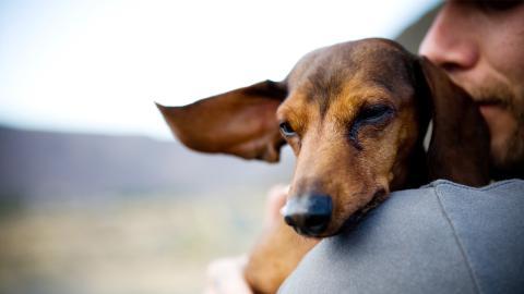 Wegen Umweltverschmutzung: Männer und Hunde leiden unter der gleichen Folge