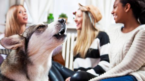 Nach Fehldiagnose reagiert ihr Husky panisch: Dann geht alles ganz schnell