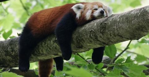 Für Menschen mit dieser Krankheit ist zu wenig Schlaf lebensgefährlich