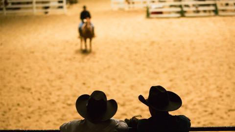 Stierkampf mal anders: In Texas werden ganz andere Tiere durch die Arena gehetzt