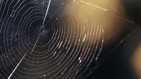 Darum ist Spinnenseide fünfmal solider als Stahl