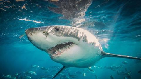 Überwältigende Bilder: 16-Jähriger überlebt Hai-Angriff