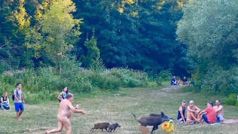 Nackte Verfolgungsjagd: Mann verfolgt Wildschwein, das seine Sachen geklaut hat