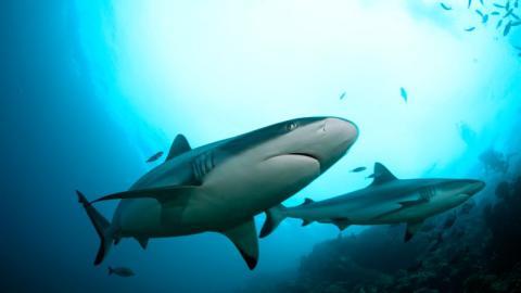Sanitäter hilflos: Hai lässt den Arm eines Mannes einfach nicht mehr los!