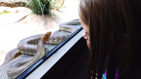 Vom Zoo ins Krankenhaus: 5-jähriges Mädchen wird von Schlange ins Gesicht gebissen