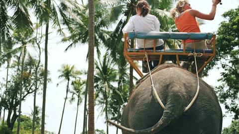 """Alarmierende Situation: """"Touristen-Elefanten"""" in Thailand stehen kurz vor dem Verhungern"""
