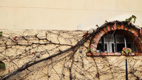 Krankhafte Sucht: Berliner Polizei entdeckt tierische Hölle hinter diesen Mauern