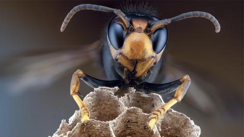 Mann rastet aus und attackiert Wespen mit Bunsenbrenner