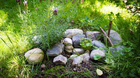 Im Garten begraben - Was tun, wenn das Haustier verstirbt?