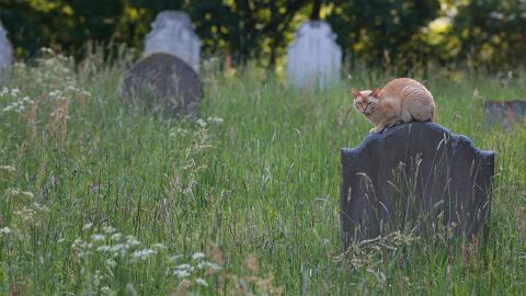 In dieser deutschen Stadt ist es bald möglich, sich mit seinem Haustier begraben zu lassen