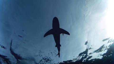 Sie ziehen einen 4-Meter-Hai aus dem Meer: Doch dann passiert etwas Ungewöhnliches