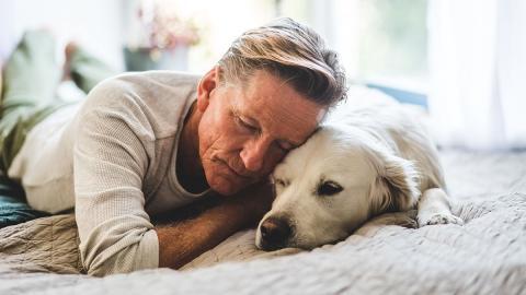 Überträgt sich das Coronavirus auch von Hunden auf uns Menschen?