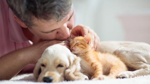 So wirkt sich das Coronavirus auf Katzen und Hunde aus