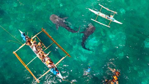 Frau füttert Haie, dann passiert das Unglück