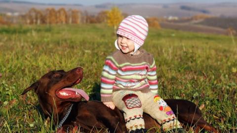 Dobermann spielt mit Tochter: Dann ändert er schlagartig sein Verhalten