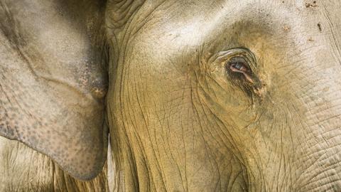Mann spielt Klavier für blinden Elefanten: Dessen Reaktion ist großartig!
