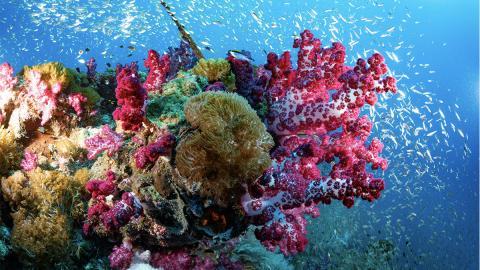 Indischer Konzern zerstört Great Barrier Reef für 30 Milliarden Dollar