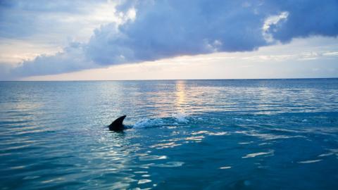 Schwangere Frau springt ins Wasser, um ihren Mann vor Hai-Attacke zu retten