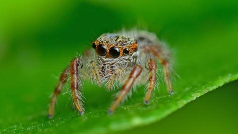 Das sind die 5 gefährlichsten Giftspinnen der Welt