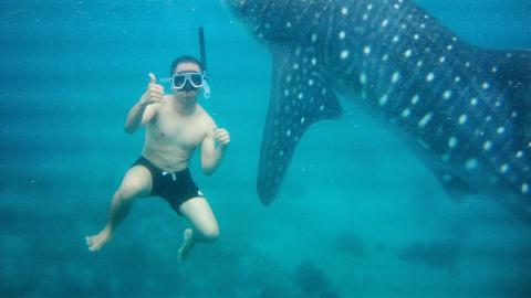 Virales Video: Ein junger Mann schwimmt mit Haien, doch es läuft nicht wie geplant