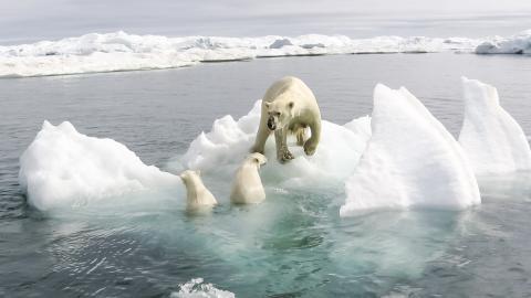 Klimawandel: Drei erschreckende Fakten zum Verbleib der Eisbären