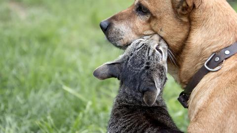 Hund vs. Katze: Forscher testen, wer von ihnen schlauer ist