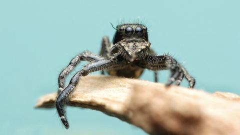 Australien: Frau entdeckt außergewöhnliche neue Spinnenart