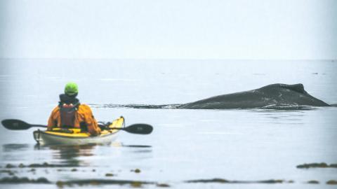 Wal verschluckt zwei Kajakfahrerinnen und spuckt sie wieder aus!