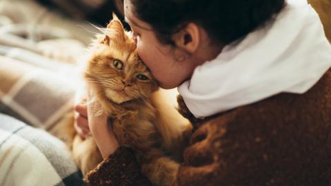 Gesundheit: Ärzt:innen warnen davor, Katzen einen Kuss zu geben