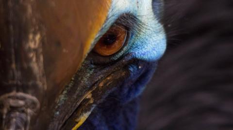 Tödliche Angriffe: Das ist der gefährlichste Vogel der Welt