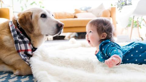 Baby krabbelt auf Hund zu: Dessen Reaktion ist genial!