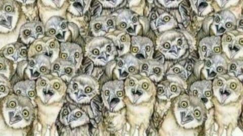 Kniffliges Bilderrätsel: So gut wie niemand entdeckt die Katze in diesem Bild!