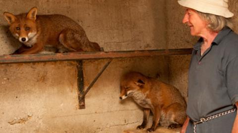 Mann rettet zwei Fuchsbabys: So ergreifend ist ihre Reaktion