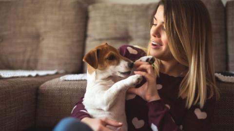 Frau adoptiert Jack-Russell-Welpe: Dann findet ihr Mann heraus, was sie sich wirklich ins Haus geholt haben