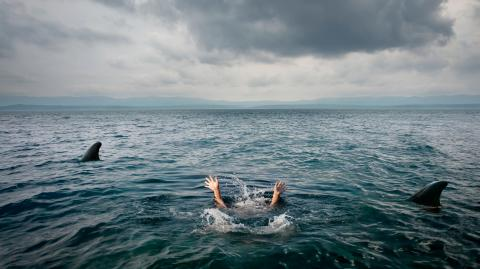 Gruseliges TikTok-Video zeigt, wie ein gigantischer Hai zwei ahnungslose Schwimmerinnen umkreist