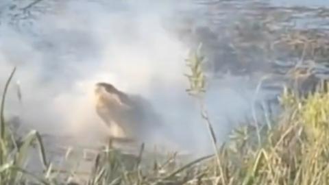 USA: Alligator frisst Drohne und spuckt Rauch (Video)