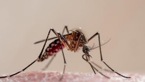 Mückenstiche ade: Der unschlagbare Trick gegen die kleinen Quälgeister