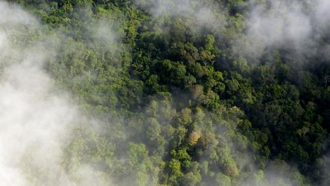 Brände im Amazonas: Diese schrecklichen Bilder zeigen, wie viel Kohlenmonoxid in die Atmosphäre entweicht