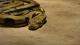 Riesige Anakonda stoppt Verkehr auf der Autobahn (Video)