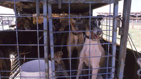 3.000 Opfer jährlich: Animal Hoarding kostet zahlreiche Leben
