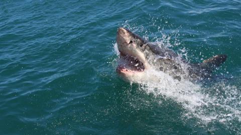 Mann filmt, wie er mit bloßen Händen mit einem Hai ringt